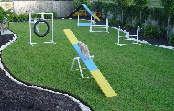 how to build an agility course in your backyard